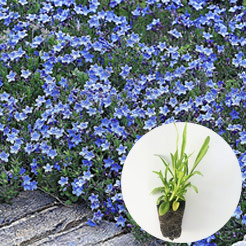 easyplant jungpflanzen online kaufen bestellen bei baldur garten. Black Bedroom Furniture Sets. Home Design Ideas