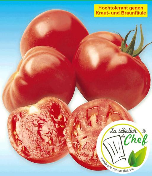 veredelte stab tomate 39 maestria 39 f1 tomaten bei baldur. Black Bedroom Furniture Sets. Home Design Ideas