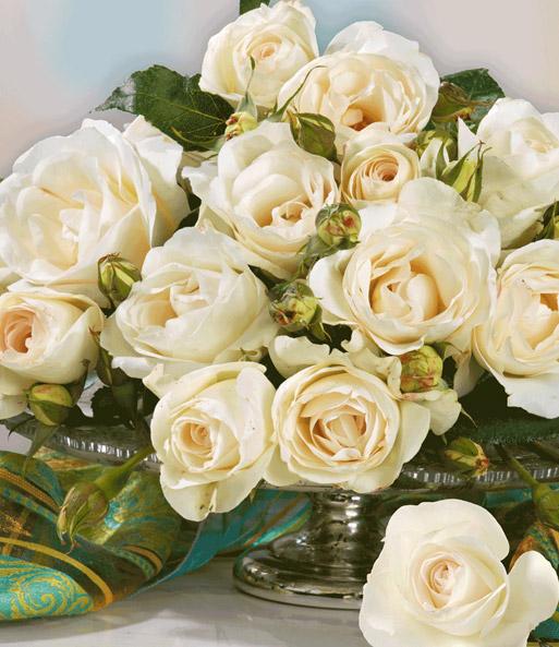 Kollektion \'Parfum-Rosen\' | Duftrosen bei BALDUR-Garten