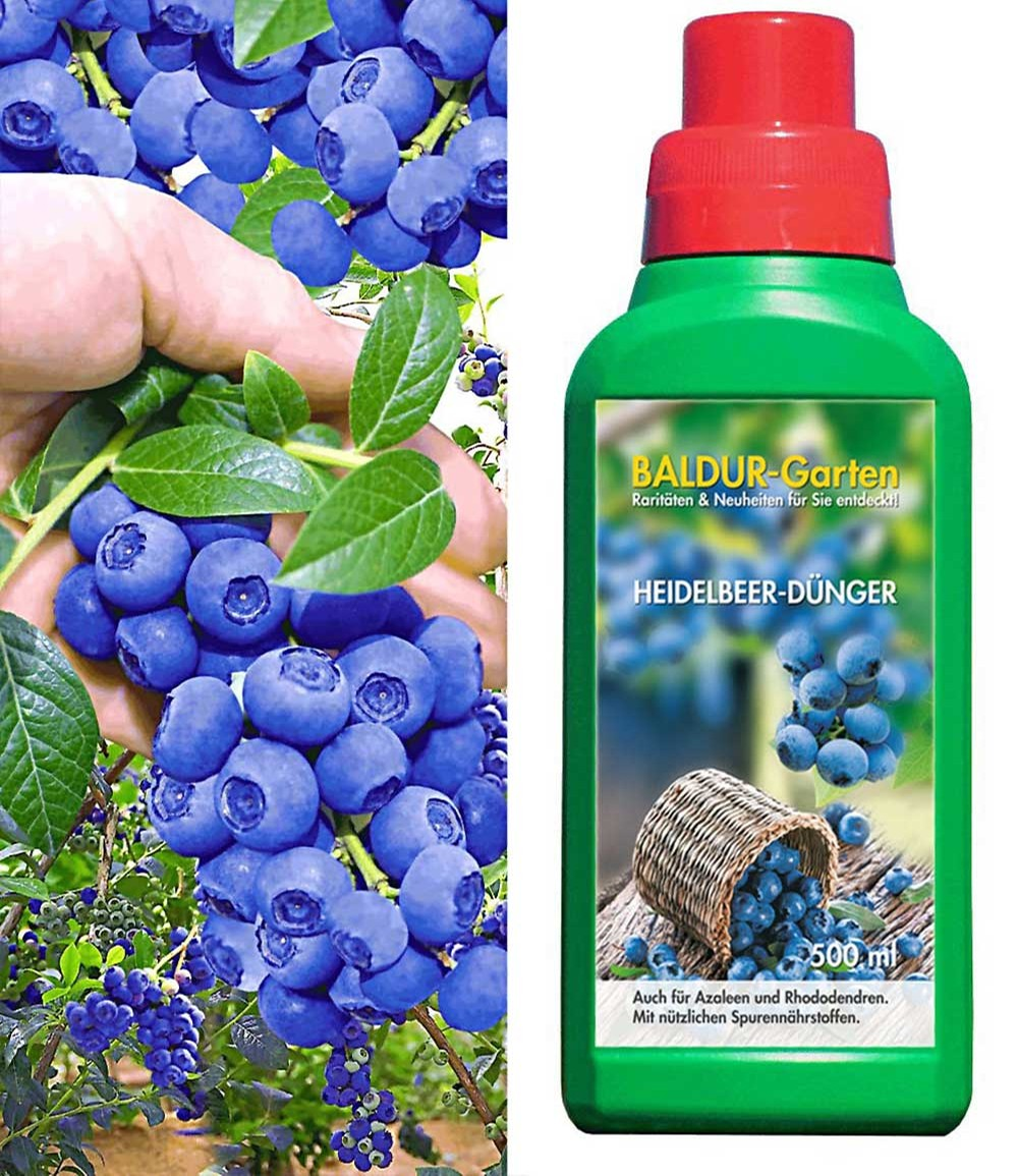 Heidelbeere 'Reka® Blue' & Dünger