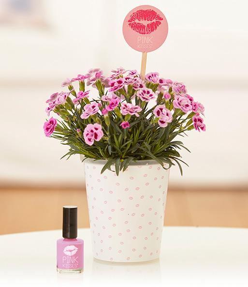 stauden nelke 39 pink kisses 39 set 6 pink kisses bei baldur garten. Black Bedroom Furniture Sets. Home Design Ideas