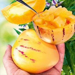 Obst (Obstpflanzen) online kaufen & bestellen bei BALDUR-Garten on