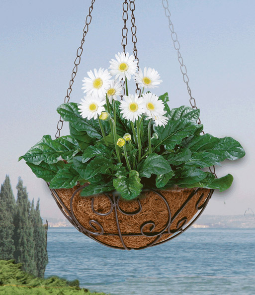 Hängekorb \'Florali\', 25 cm ø
