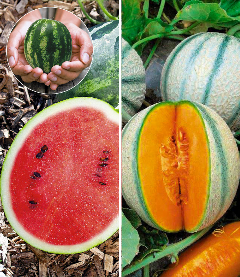 Mini-Melonen-Kollektion