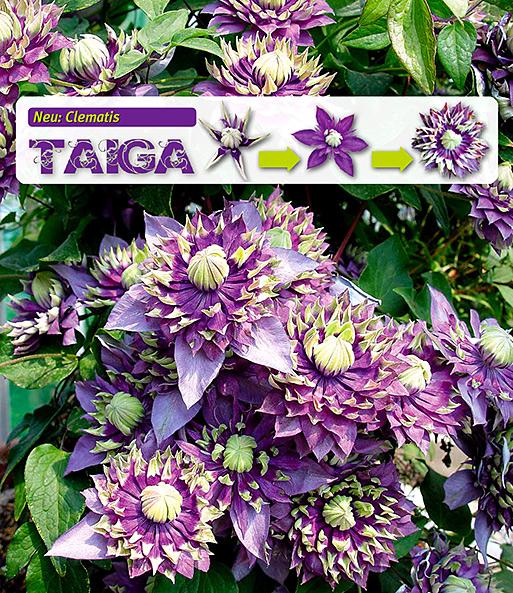 Immer Blühender Garten blühende sträucher kaufen bestellen bei baldur garten