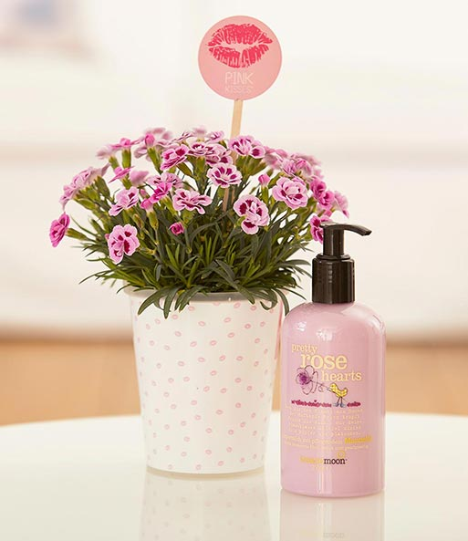 Stauden-Nelke 'Pink Kisses®' Set 3