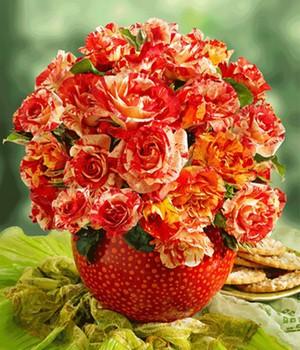 Malerrose&reg,  - Alfred Sisley&reg, - ,1 Pflanze