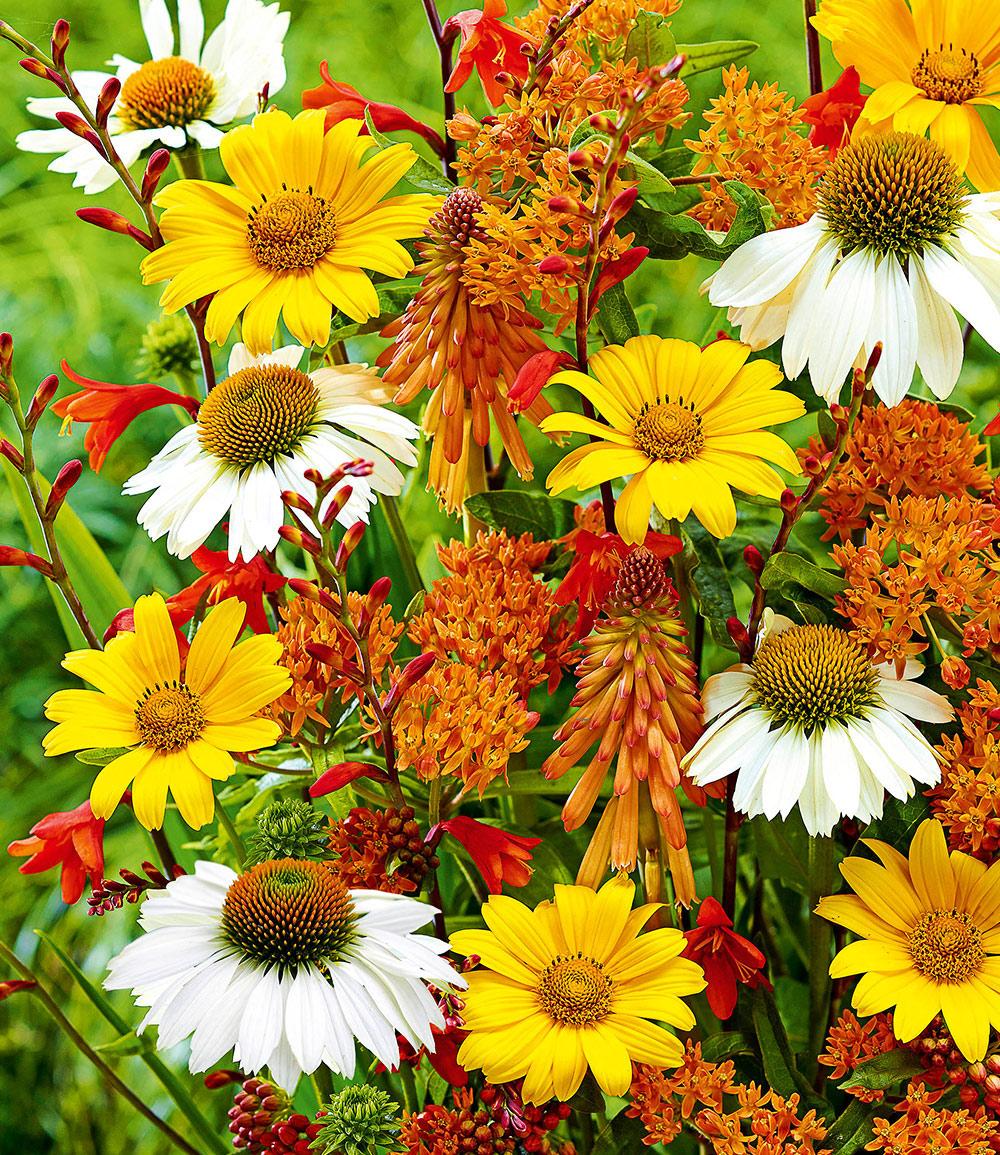 Staudenbeet 'Bienen-Magnet'