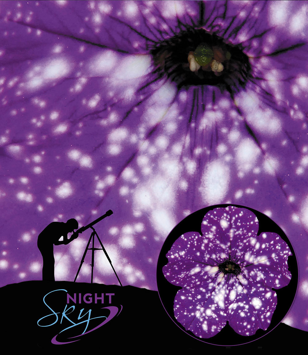 Hänge-Petunie 'NightSKY®'