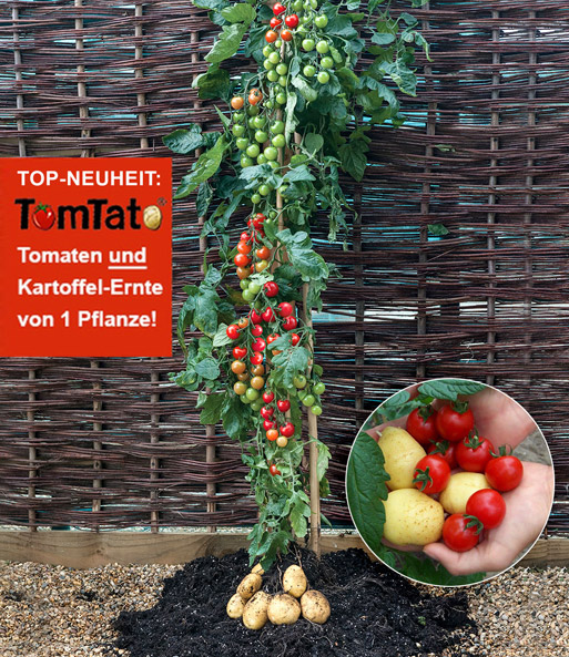 tomtato potatopot pflanzkartoffeln bei baldur garten. Black Bedroom Furniture Sets. Home Design Ideas