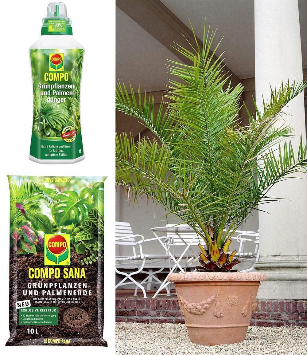 COMPO®  Palmendünger & Palmerde & Kanarische Dattelpalme