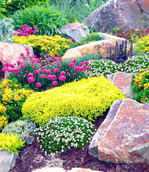 steingarten mix happy flowers 1a qualit t baldur garten. Black Bedroom Furniture Sets. Home Design Ideas