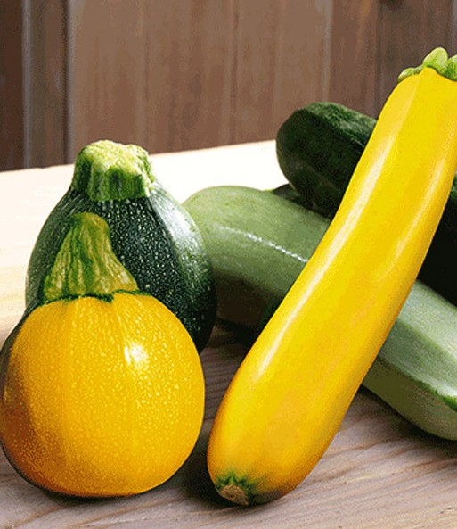 zucchini kollektion zucchini bei baldur garten. Black Bedroom Furniture Sets. Home Design Ideas