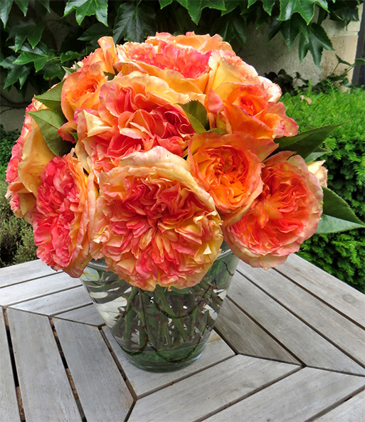 Parfum-Rose Crepuscule d´été®: 1A-Qualität | BALDUR-Garten