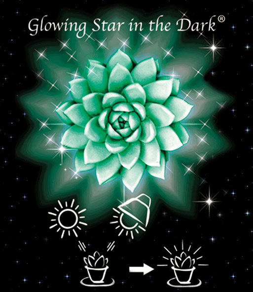 Glowing Star in the Dark®