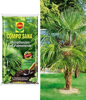 COMPO® SANA®  Palmenerde  & Washingtonpalme