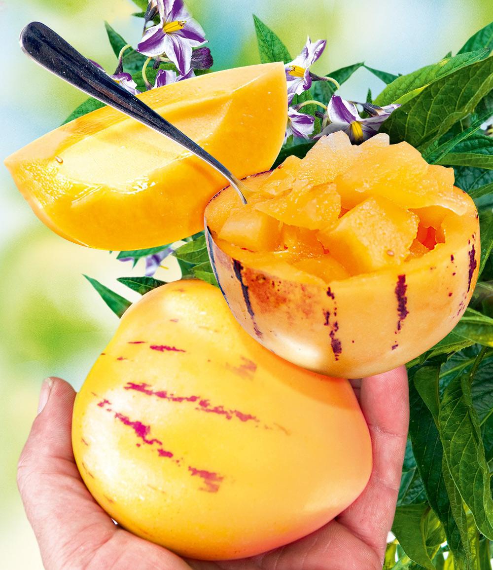 Melonenbirne 'Sugar Gold®'