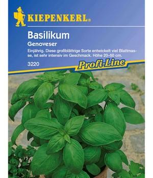 Basilikum ´Breitblättrig´ (1 Portion Samen)