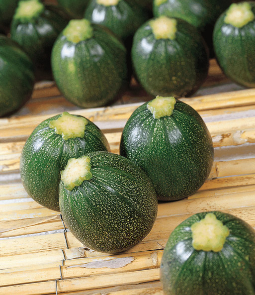zucchini eight ball f1 1a qualit t kaufen baldur garten. Black Bedroom Furniture Sets. Home Design Ideas
