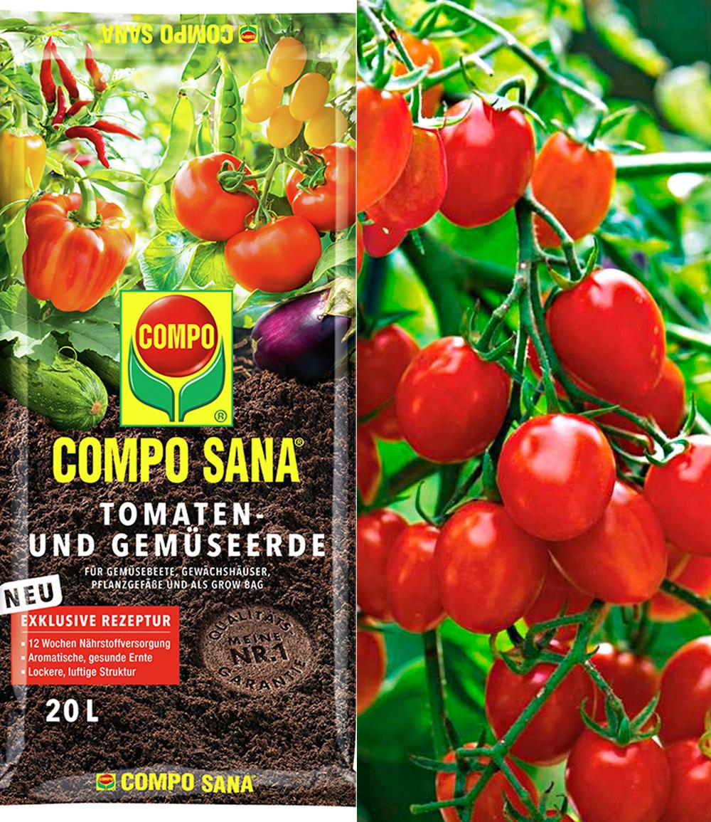 Snack-Tomate 'Romello' F1 & COMPO® SANA® Tomaten- und Gemüseerde