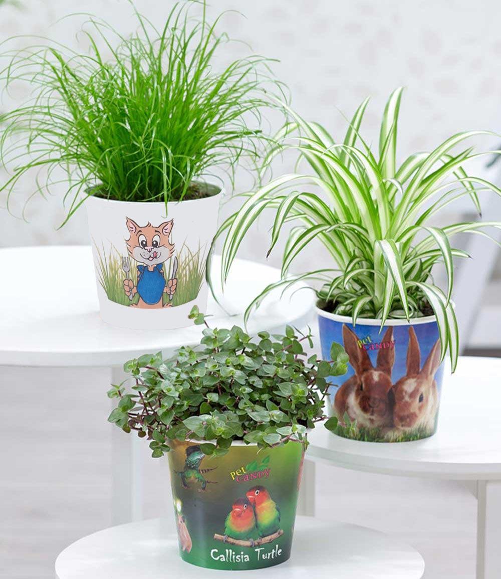 Pflanzen-Set 'Leckereien für Ihr Haustier' inkl. Papier-Übertopf