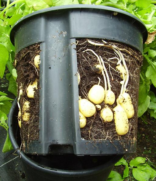 pflanzbeutel für kartoffeln pflege tipps, Gartengerate ideen
