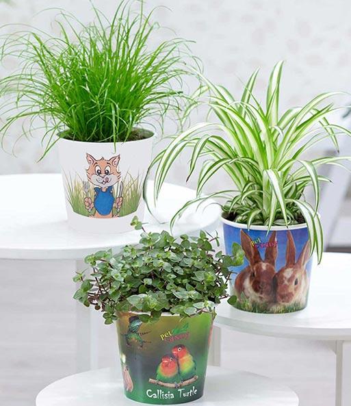 pflanzen set 39 leckereien f r ihr haustier 39 1a zimmerpflanzen online kaufen baldur garten. Black Bedroom Furniture Sets. Home Design Ideas