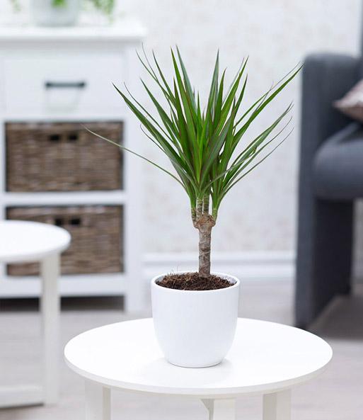luftreinigender zimmerpflanzen mix gr npflanzen bei. Black Bedroom Furniture Sets. Home Design Ideas