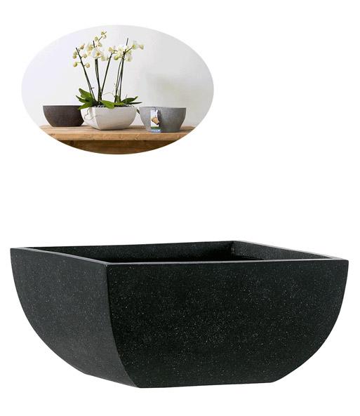 bubikopf gummibaum einblatt xxs zimmerpflanzen mit bertopf bei baldur garten. Black Bedroom Furniture Sets. Home Design Ideas