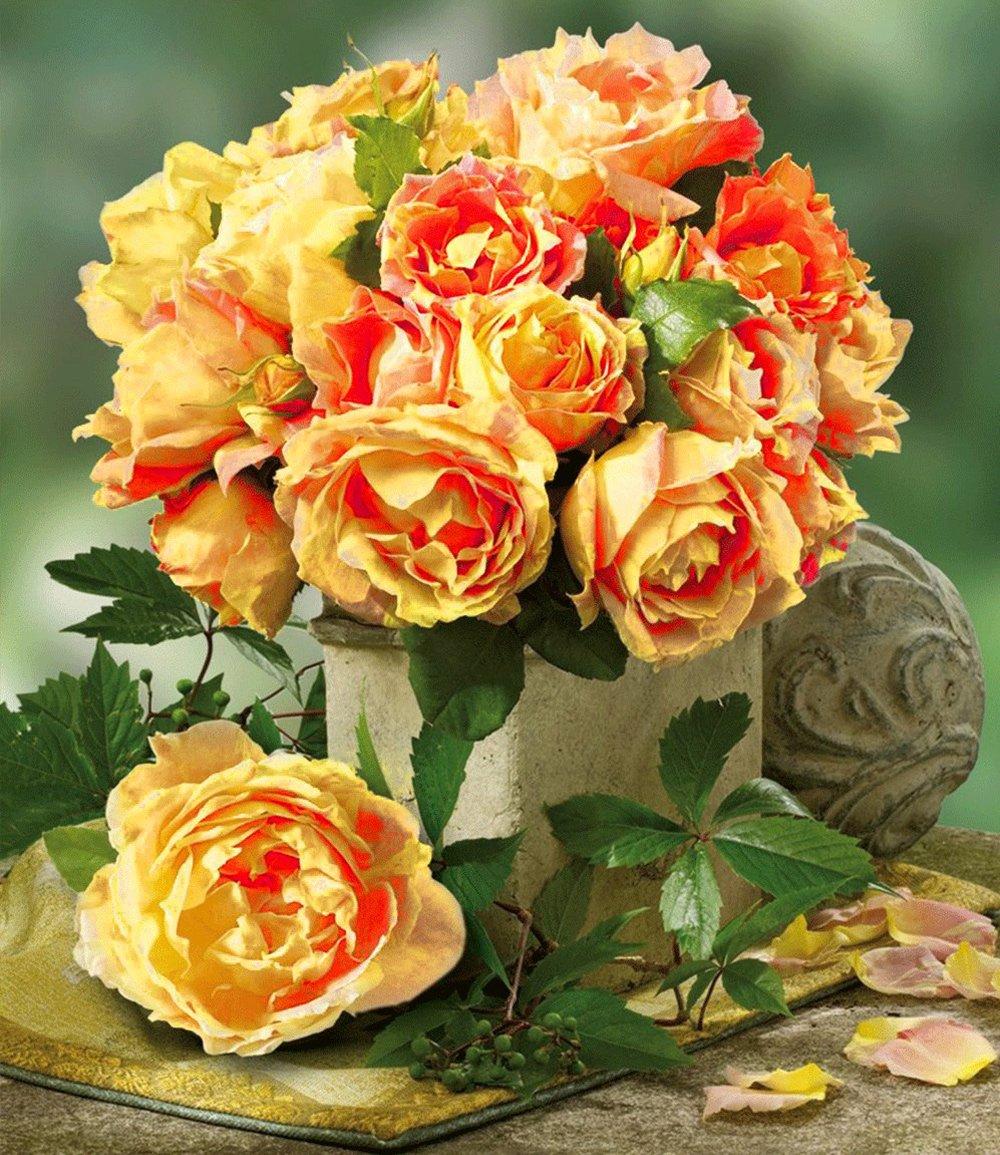 Maler-Rose® 'Paul Cézanne®'