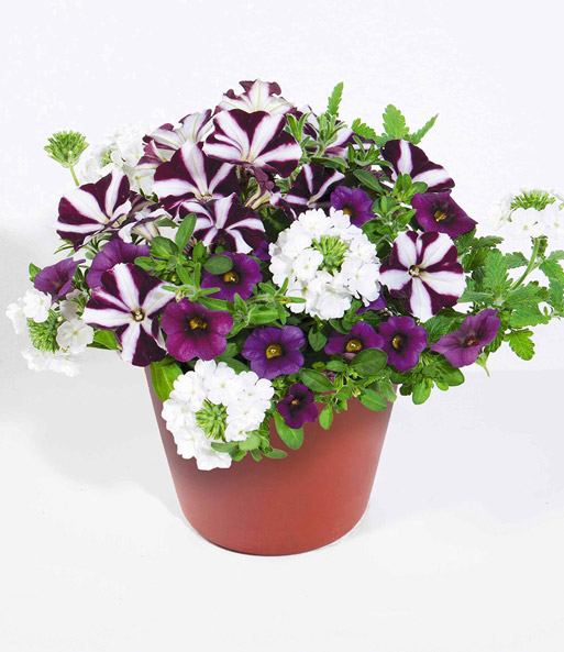 Trixi® Bouquet 'Lilac & White'