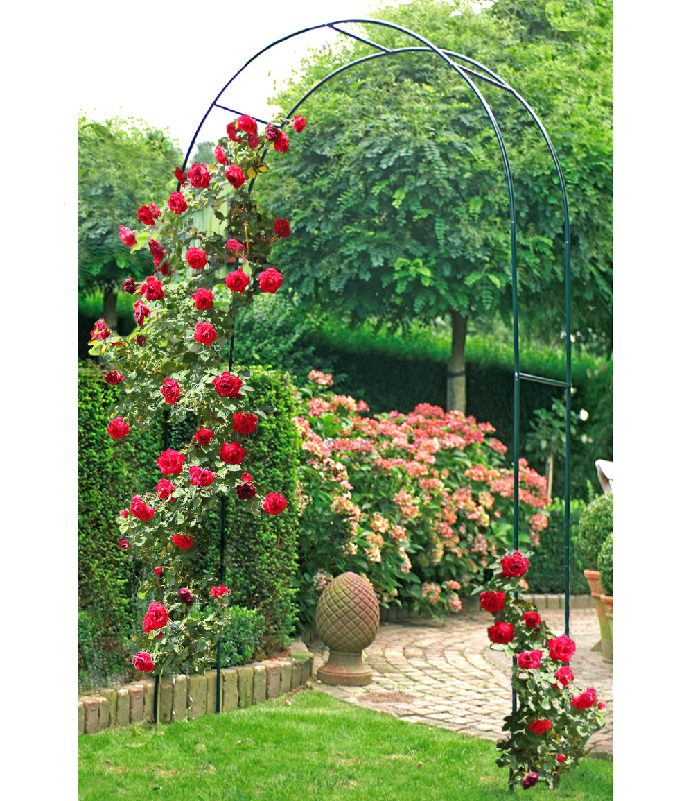 Rosenbogen Flora