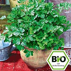 BIO Kräuterpflanzen