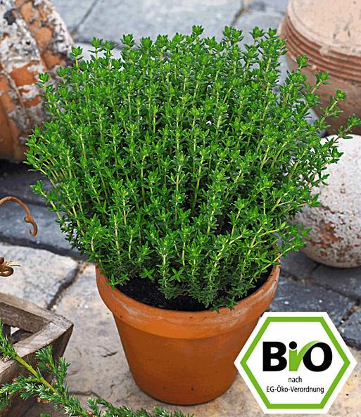 Design#5001298: Bio-kräuter pflanzen jetzt online kaufen bei baldur-garten. Pflanzen Kultivieren Aromatische Gewurze Garten