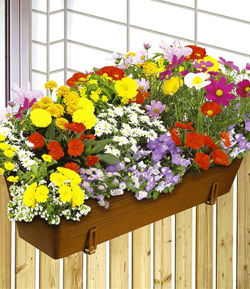 Bunter BlumenTeppich  Saatband Blumen bei BALDURGarten
