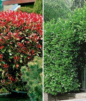 Sichtschutz im Garten – Natürlicher Sichtschutz | BALDUR-Garten