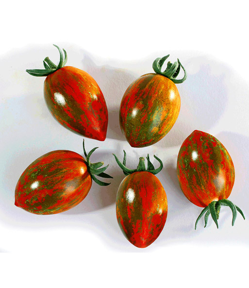 Snack-Tomate 'Tiger Red'