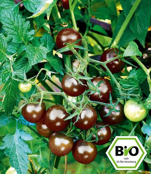 bio tomate black cherry 1a pflanzen baldur garten. Black Bedroom Furniture Sets. Home Design Ideas