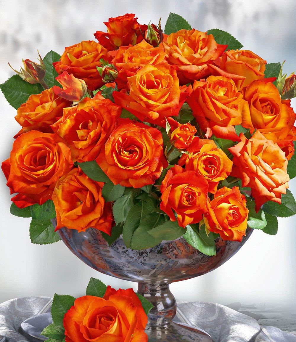 Parfum-Rose 'France Libre®'