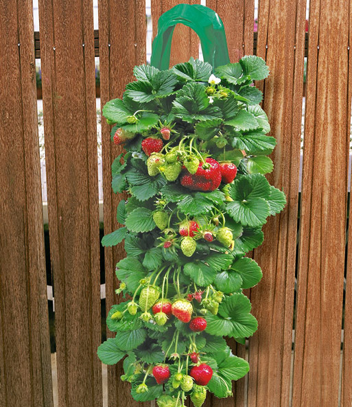 2 Erdbeer Pflanzbeutel 9 Hange Er Obst Fur Balkon Terrasse Bei