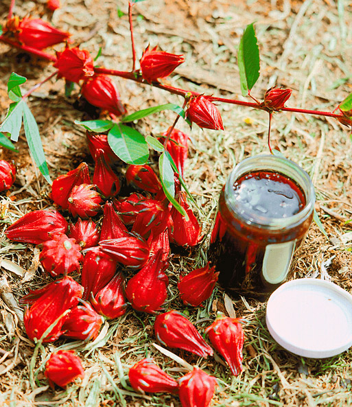 tee hibiscus 39 rosemallow 39 zimmerpflanzen bei baldur garten. Black Bedroom Furniture Sets. Home Design Ideas