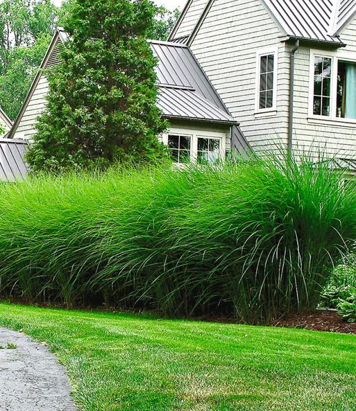 natürlicher sichtschutz online kaufen & bestellen bei baldur-garten, Garten und Bauen