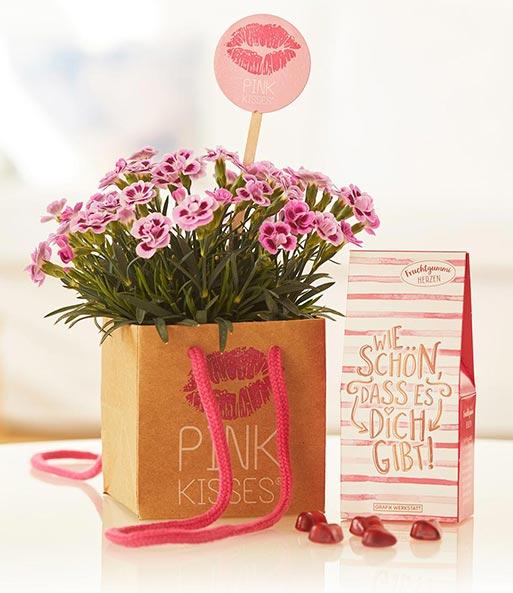 stauden nelke 39 pink kisses 39 set 5 pink kisses bei baldur garten. Black Bedroom Furniture Sets. Home Design Ideas