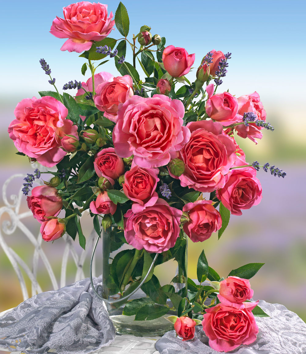 Parfum-Rose 'Génération Jardin®'