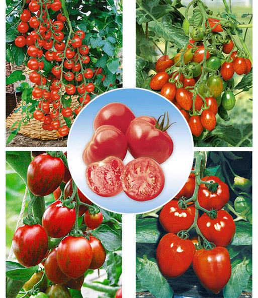 veredelte tomaten kollektion 39 la se obst f r pflanzk bel bei baldur garten. Black Bedroom Furniture Sets. Home Design Ideas