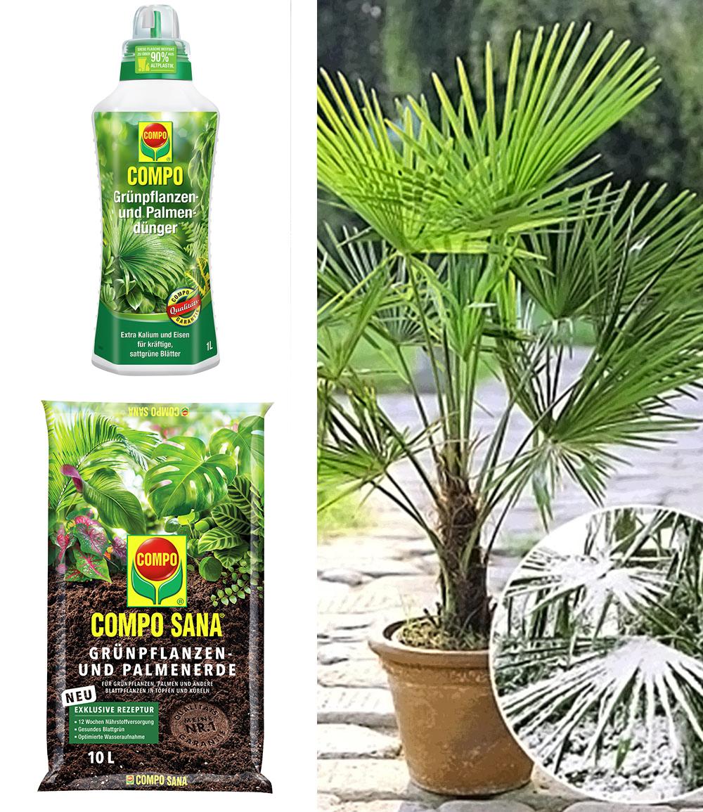 COMPO®  Palmendünger & Palmenerde &Winterharte Kübel-Palme