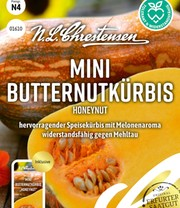 Mini-Butternutkürbis 'Honeynut'