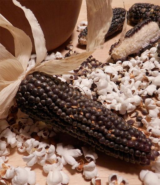 schwarzer bio popcorn mais bio gem se pflanzen a z bei baldur garten. Black Bedroom Furniture Sets. Home Design Ideas