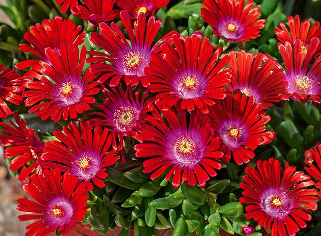 HIT: Unzählige Blaue Blüten Jedes Jahr!