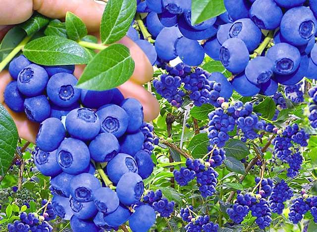 Pflanzenversand Gartenversand Pflanzen Shop Baldur Garten